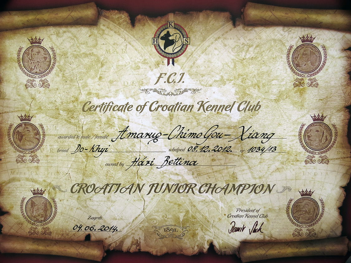 Amaruq-Chimo Gou-Xiang's, a.k.a. Sheena's Croatian Junior Champion certificate